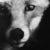 Profile picture of Edd Fox
