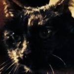Profile picture of Camilla